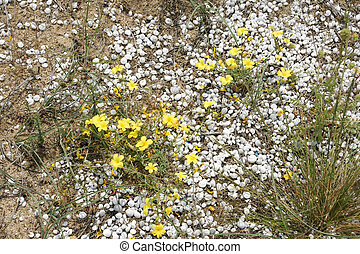 spring in the desert 4 - the first flowers in the desert in...
