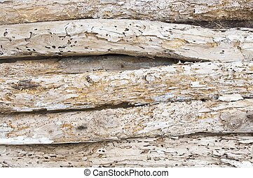 woodworm - detail of a woodworm beams