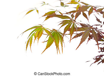 maple leaves, lovely floral design element (shallow depth of field)