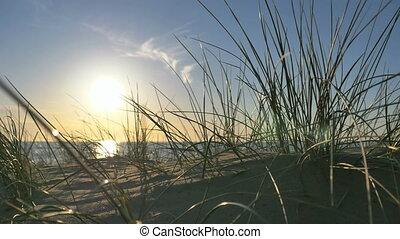 sunny beach with sand dunes and blue sky
