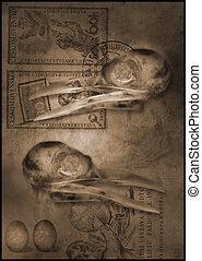 bird skull still-life - bird skulls still-life concerned...