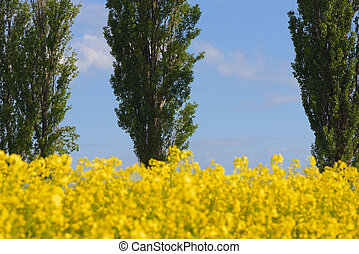 Blossoming field and trees