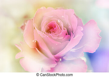 Pink roses with blur background