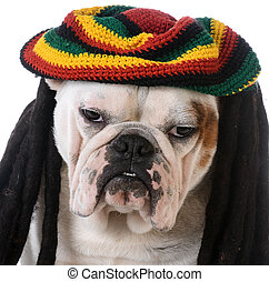 funny dog with dreadlocks - bulldog