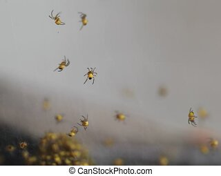 spiders - small colonies of spiders among the cobwebs. high...