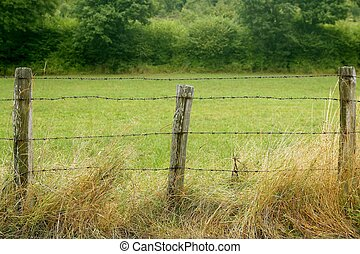 Green meadow with wired rural fence