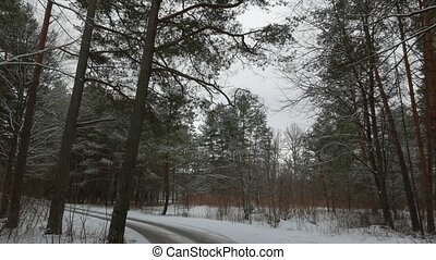 winter forest road with pine trees