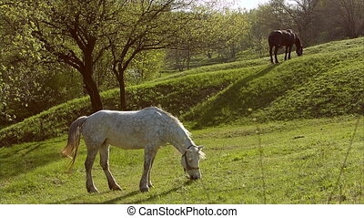 Horses in a field, landscape