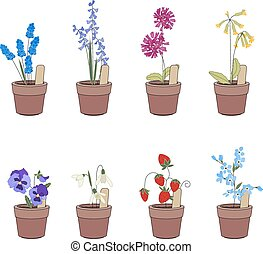 Flower pots with flowers - muscari,primrose and viola Plants...