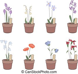 Flower pots with flowers - iris, hyacinthus, bluebell Plants...