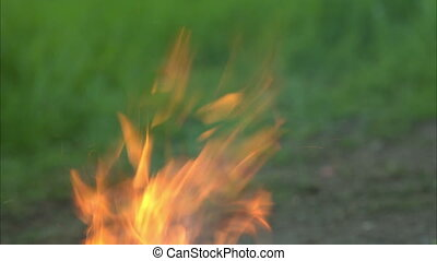 Forest fires - Fire rises over green background of forest
