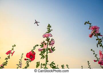 flor, jardín, cielo, avión, malva loca, ocaso