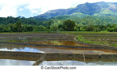 Mountain landscape with rice plantation in Sri Lanka