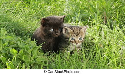 Little tabby kittens on green grass HD - Group of four...