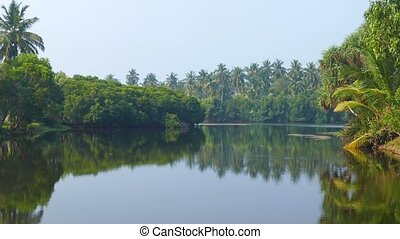 tropical lake in Sri Lanka