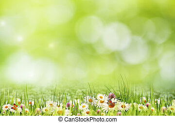 Abstract natural landscape with beauty daisy flowers and...
