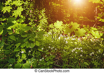 Beauty morning in the spring forest, natural backgrounds