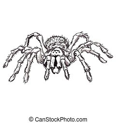 Black spider animal - Drawn Black spider animal illustration