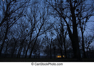 House in the woods at night