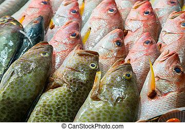 Sea food - Fresh catch of fish background Sea food