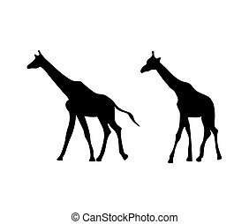 black silhouettes of giraffes