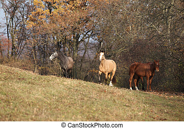 Batch of horses running in autumn