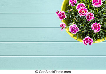 Turquoise wooden planks background with Top view of purple...