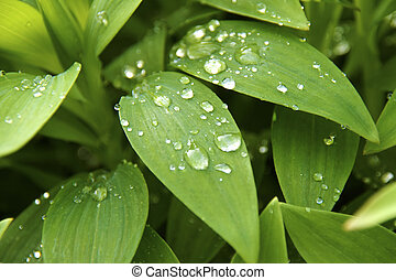 Leaf with rain droplets - Green leaf with rain droplets and...
