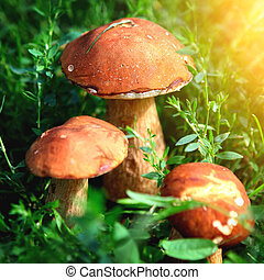 Mushrooms in the Grass - Three Mushrooms in the Grass at the...