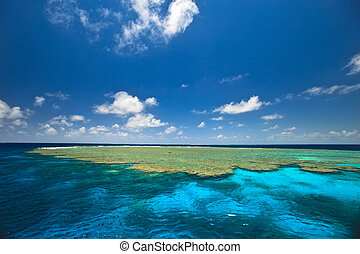 Touring the Clam Gardens at the Great Barrier Reef - The...