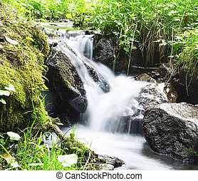 Wild Creek Waterfall in the Forest with Green Vegetation