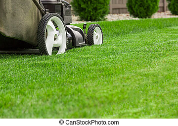 Lawn mower on green grass
