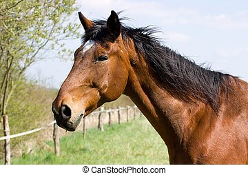 brown horse - Portrait of a brown horse