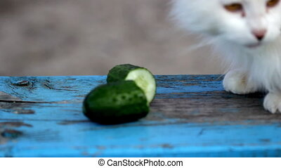 Cat and cucumber. Part - Cute cat eating fresh cucumber on...