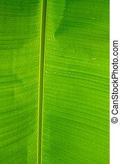 Banana leaves background