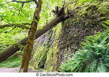 Fallen Tree in Oregon Forest