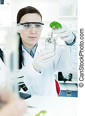 study of genetic modified GMO plants in the laboratory.