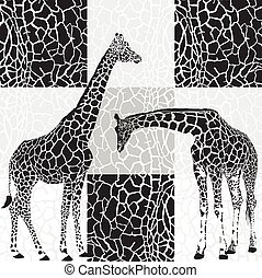 Giraffes and camouflage