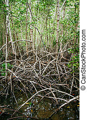 Mangrove roots reach into shallow water in a forest growing in the Mergui Archipelago off the coast of thailand.