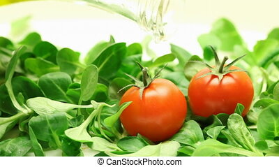 rucola, tomatoes and olive oil - close up of rucola,...