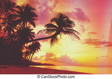 Beautiful tropical sunset with palm trees silhoette at...