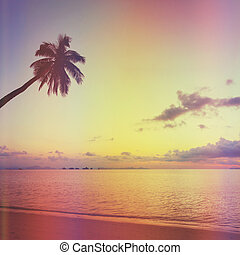 Tropical sunset with palm tree silhoette at beach, retro...