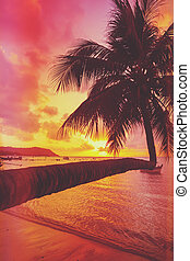 Tropical sunset with coconut palm