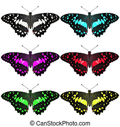 exotic color butterfly on white background - exotic colorl...