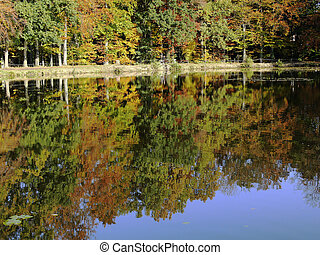 Pond with water reflection, Germany - Pond with water...
