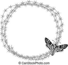 death's head hawk moth (Acherontia atropos) and barbed wire...