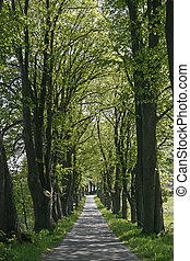 Alley with trees in Germany - Alley with trees in Kloster...