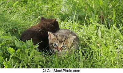 Little tabby kittens on green grass - Group of four little...