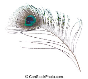 Peacock feather - Close-up peacock plume isolated on white...