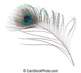 孔雀, 羽毛,
